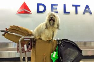 Traveling with dogs internationally
