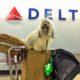 Kutya behozatala: elkerülhető hibák, ha kutyákkal nemzetközi utazik