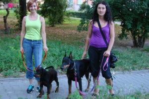 Kutya behozatala: a kutya Európából történő szállításának költségei