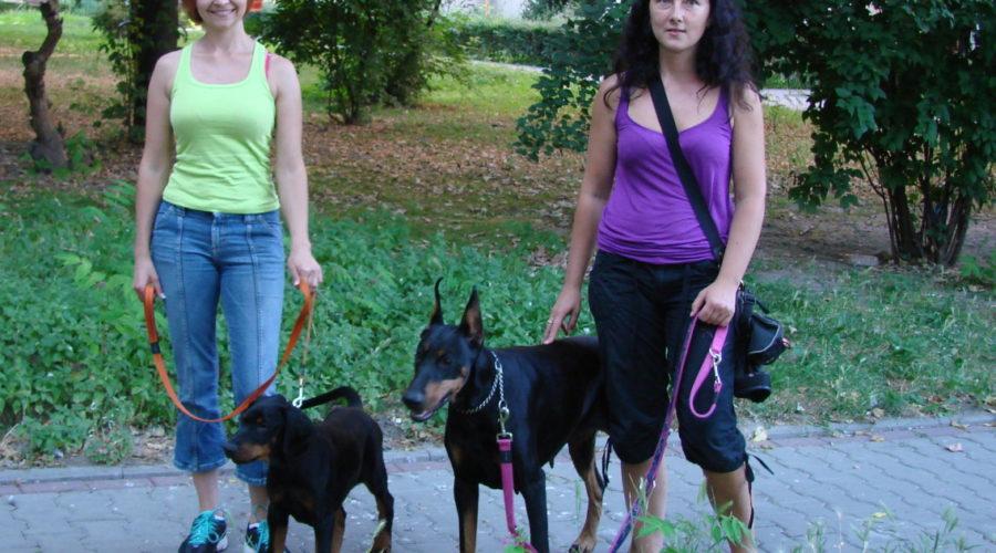 Importar un perro: costo para enviar un perro desde Europa