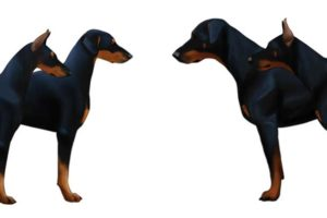 American vs European Doberman
