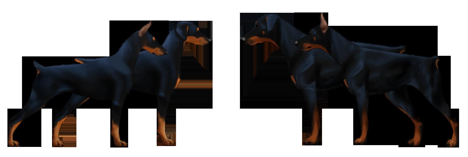 Doberman Dog Fight Video