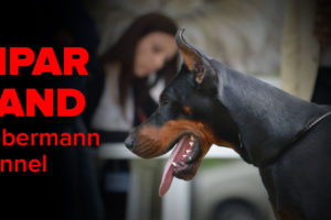 Lipar Land Dobermann kennel review