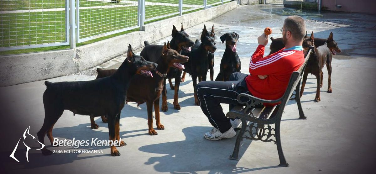Betelges Dobermann Kennel review