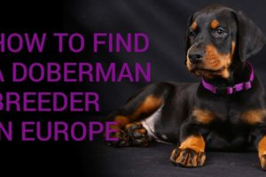 Importing a dog: how to find a breeder in Europe