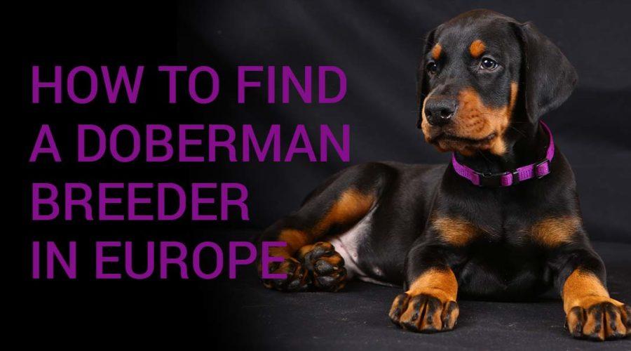 Importar un perro: cómo encontrar un criador en Europa