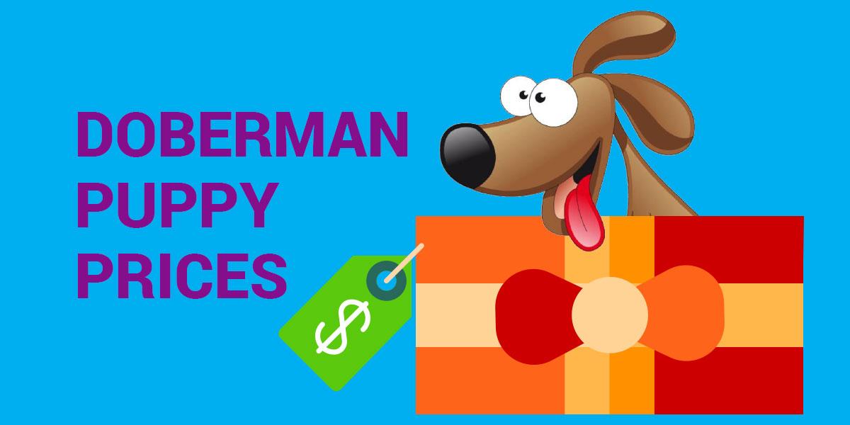 doberman puppy prijs wereldwijd