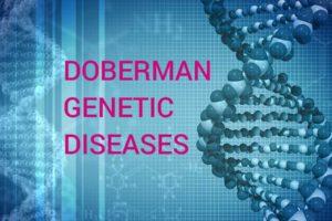 Доберман генетске болести