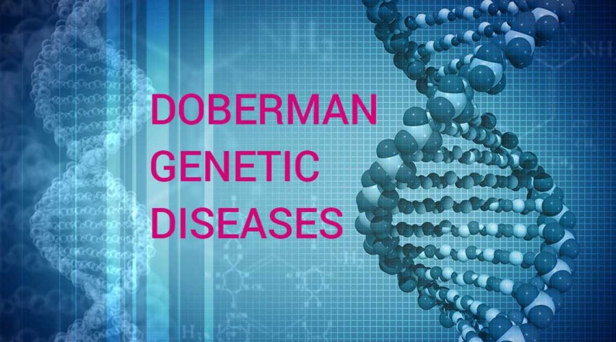 Doberman genetic diseases
