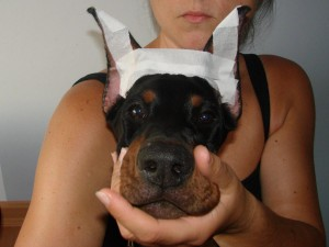 Lekka metoda umieszczania w uchu - korona z taśmy