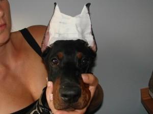 Lahka metoda objavljanja ušes - tračna krona
