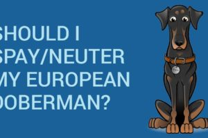 Should I spay-neuter my European Doberman?