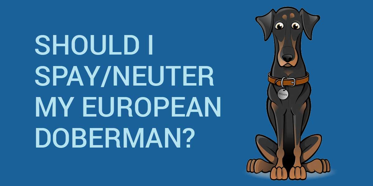should I spay neuter my european doberman