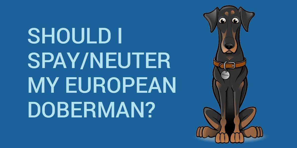 skulle jeg spay neuter min europæiske doberman